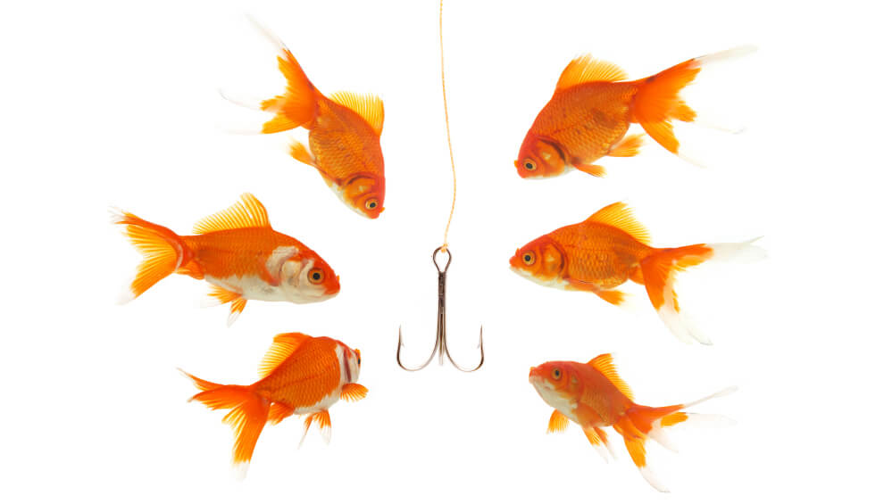goldfishes looking to the fishhook